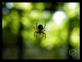 Small Spider by Bgranny