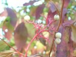 Green and Red Berries by MissJenRose