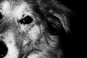 The Dog III :Edit: by ron-brouillette
