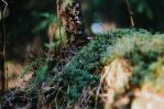 Old and Mossy by ObservableUniverse