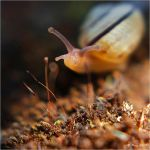 Petit Escargot by Peug