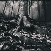 .Silent Trees. by sabbbriCA