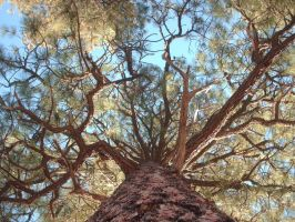 Branching Out by ArizonaRed