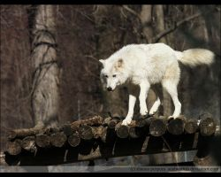 atka on the perch by causticxace