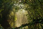 Lithuanian jungle by Mentos18