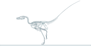 Velociraptor skeleton by oghaki
