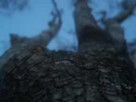 A Tree's Perspective 2 by invaderjanie