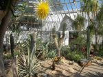 Desert room- Phipps Conservatory, Pittsburgh by pamixx