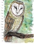 Barn owl sketch by user-name-not-found