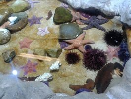 Sea Stars and Urchins by NESToperative