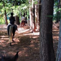 Trail Riding by ShirePower