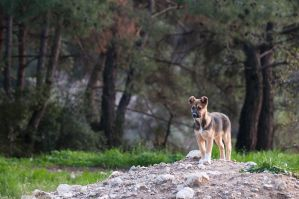 King of the Hill by sareen