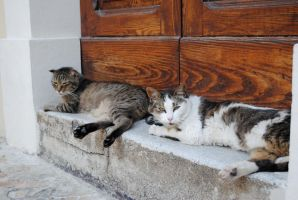 Cats on the street by Kitsch1984