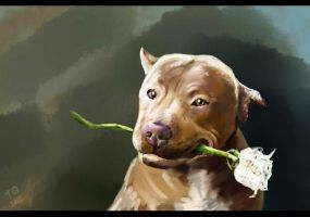 portrait of the pit bull by TinaGrey