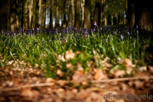 Ashridge by oEmmanuele