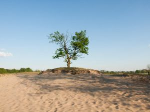 STOCK Tree by Inilein