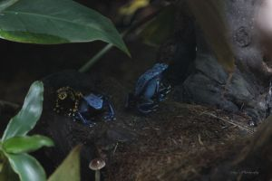 Colorful Frogs by geiersphotos