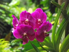 Orchids 3 by astrals-stock