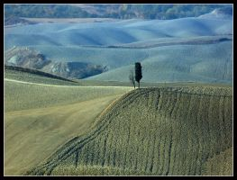 Tuscany Trees by kanes