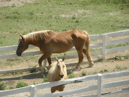 horses3 by JuneButterfly-stock