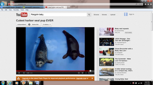 Seal Pups Squeal by lonelynightrain