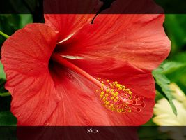 Red Flower by Xiox231
