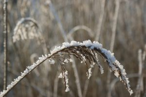 frozen reed by picture-melanie