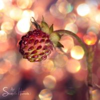 :the star berry: by Shum23