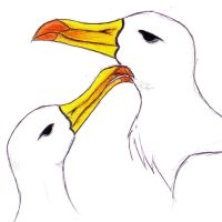 Albatrosses by Efferd
