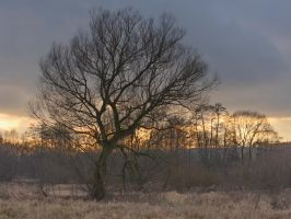 Sunset tree by starykocur