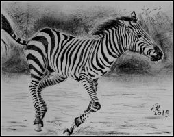 Zesty Zebra by philippeL