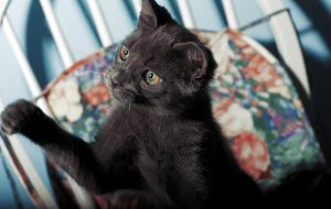Russian Blue by Kendra-Paige