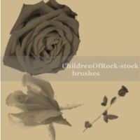 Roses brushes by ChildrenOfRock-Stock