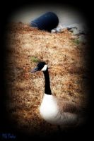 Goose by MonkeyQueeen