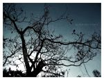 BRANCHES of LIFE by puken
