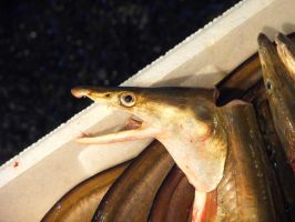"""EELS DON""""T FEEL by AccountConquest"""