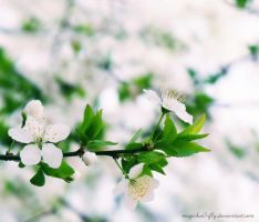 Pure Spring by magicbut3rfly