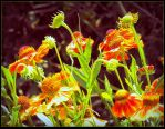 Sunny Flowers by surrealistic-gloom