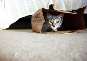 Mitzi in a bag by Tal96