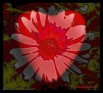 Bloomin Heart by creativemikey