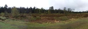 Swinley Forest 2 by asm495