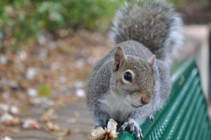 Squirrel's Eye View by MonicaHolsinger