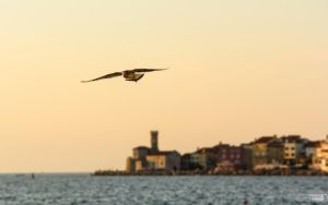 Leavin Piran by TomazKlemensak