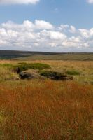 Wild Grasslands by parallel-pam