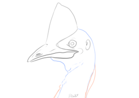 Cassowary WIP by Puccoon