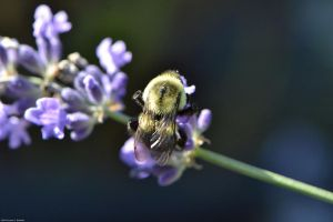 Bumble Bumble by WickedOwl514