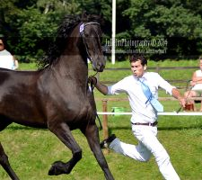 Friesian 48 by JullelinPhotography
