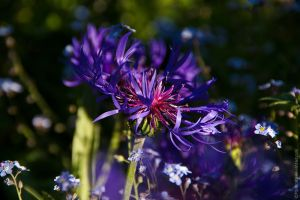 Arms of a flower by MDelicata