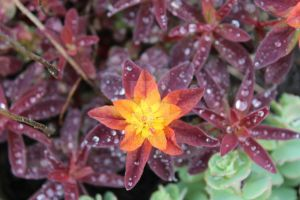Starburst and Rain by Pictureste