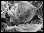 Thousand Acre Vole - Oct 2007 by pearwood